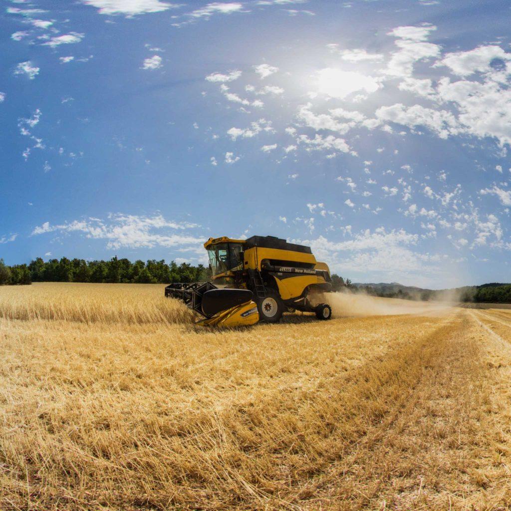 Virtual tour azienda agricola